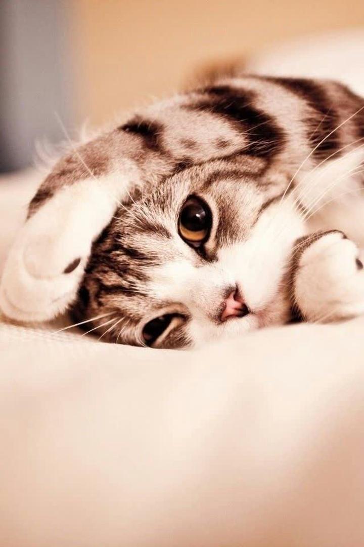 Hình nền chú mèo siêu dễ thương